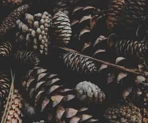 christmas, winter, and brown image
