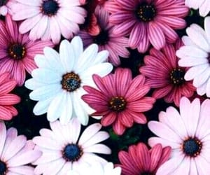 beautiful and flower image