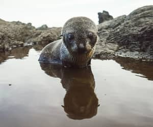 animal, cute, and fur seal image