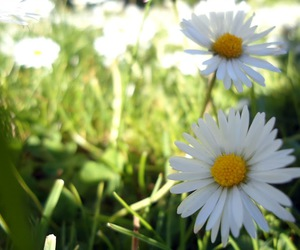 beautiful, grass, and spring image