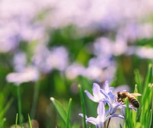 bee, flowers, and nature image