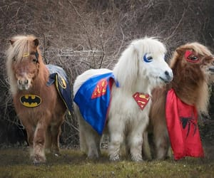 horse, spiderman, and karneval image