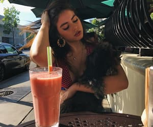 beauty, clothes, and dog image