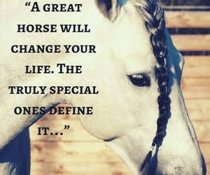 horse, love, and quotes image