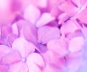 flowers, purple, and background image