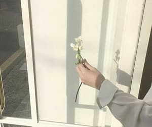 aesthetic, flower, and white image