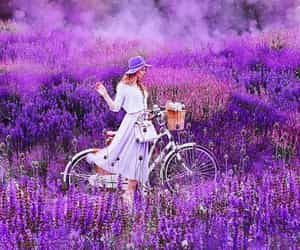 bicycle, flowers, and nature image