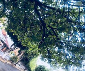 arboles, lluvia, and paisaje image
