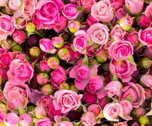 flowers, roses, and flores image