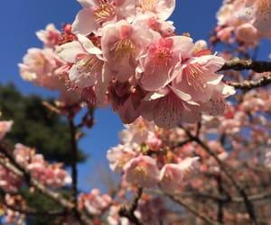 flowers, japan, and korea image
