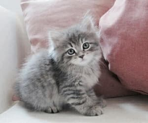 pink, grey, and cat image