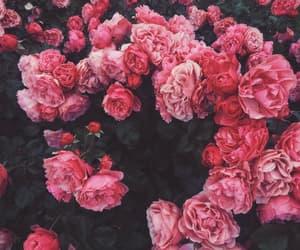 pink, beautiful, and fashion image