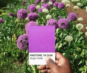 pantone and flowers image
