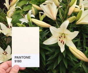 flowers and pantone image