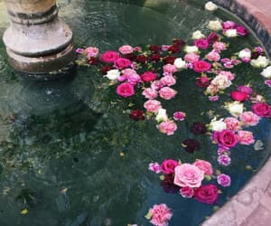 beautiful, flowers, and fountain image