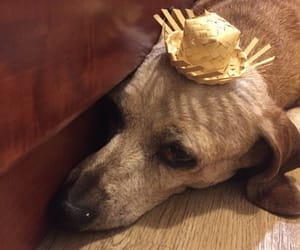 cleo, old lady, and hat image