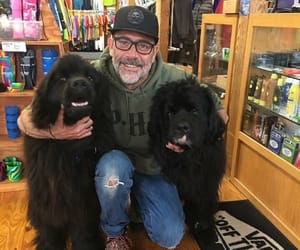 dogs, cute, and jeffrey dean morgan image