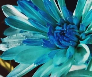 blue, flowers, and teal image