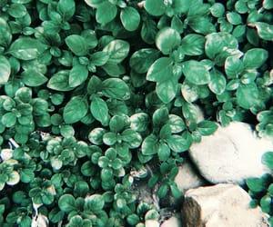 grain, nature, and vscocam image