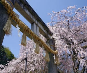cherry blossom, inspiration, and japan image