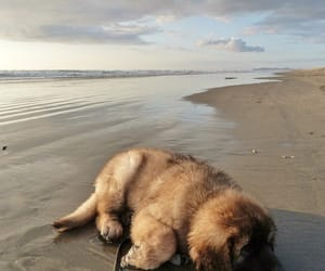 dog, animals, and beach image