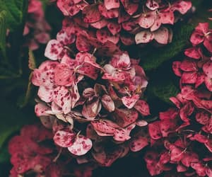 flower, flowers, and pinkflowers image