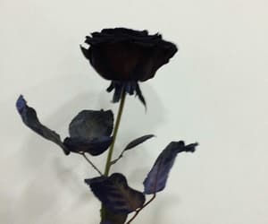 rose, aesthetic, and black image