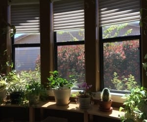 green, window, and plant image
