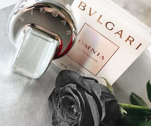 black rose, luxury, and bvlgari image
