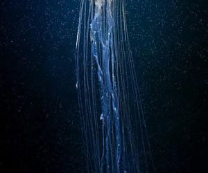 jellyfish, sea, and animal image