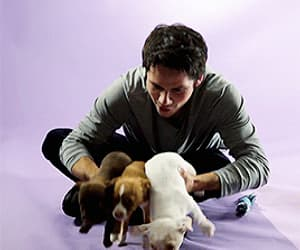 actor, gif, and puppies image