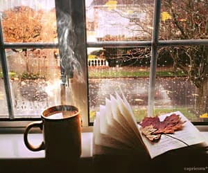 tea, book, and gif image
