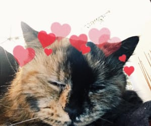 animals, cats, and heart image