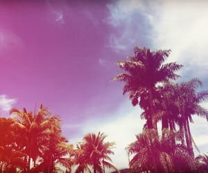 palm tree, summer, and vocation image