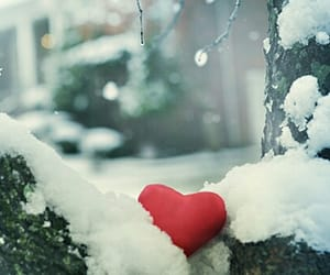 heart, valentine, and nature image