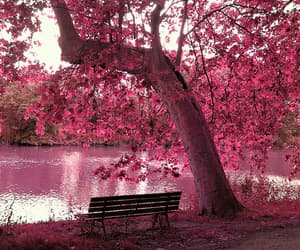 beauty, flowers, and tree image