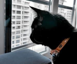 cat, blackcat, and wallpaper image