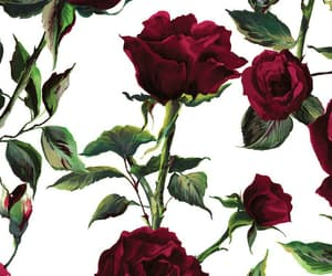 aesthetic, alternative, and roses image