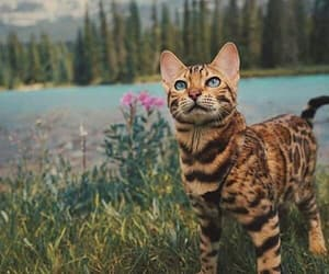 beautiful, cat, and nature image