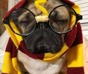 costume, harry potter, and pug image