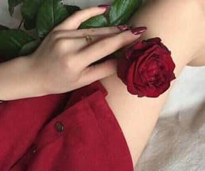 red, rose, and nails image