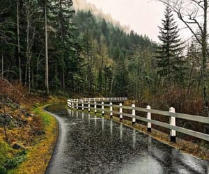 rain, nature, and forest image