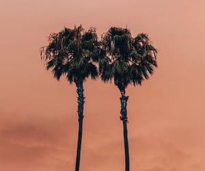 orange, palms, and palm trees image