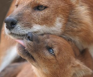 adorable, baby, and fox image