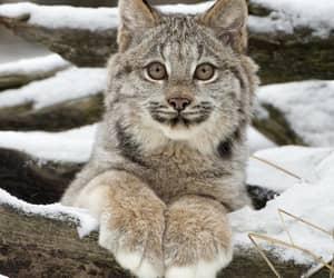 animal, snow, and beautiful image