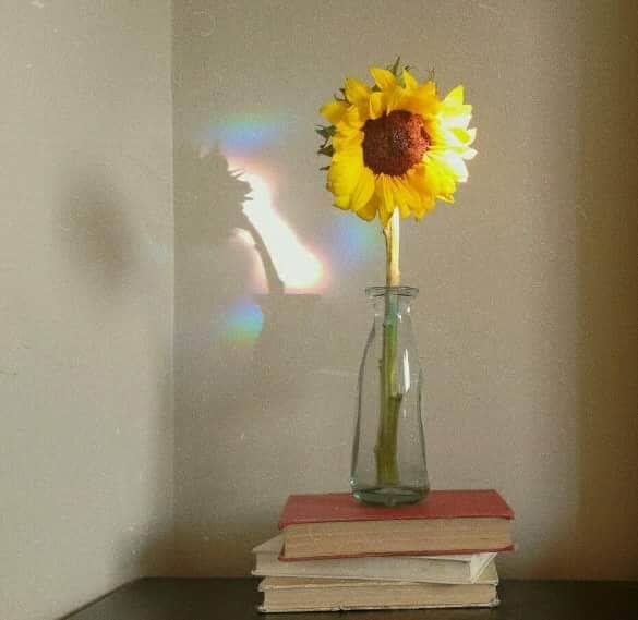 libros, amarillo, and girasol image
