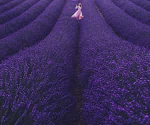 beautiful, lavender, and purple image