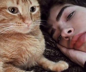 cat, cute, and manurios image
