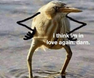 bird, funny, and meme image