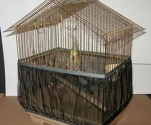 bird cage, cages, and decorative bird cages image